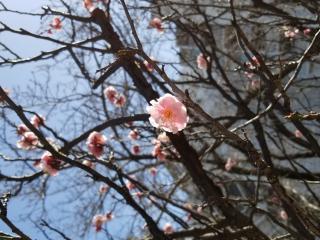咲いてきた♪画像