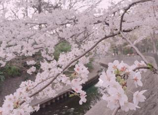 春を感じる☆画像