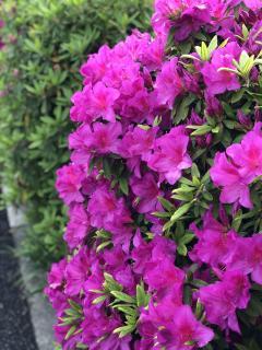 春の匂いが好き画像