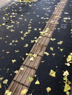 紅葉に見にイコウヨー画像