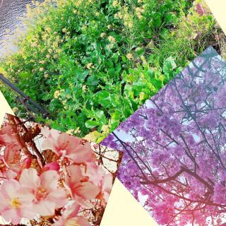 桜の木の下には〇〇が埋まってるとか埋まってないとか画像