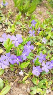 綺麗なお花と💓画像