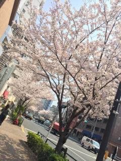 初めてのblog (●´▽`●)画像