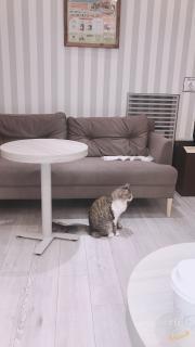 猫🐱になりたい画像