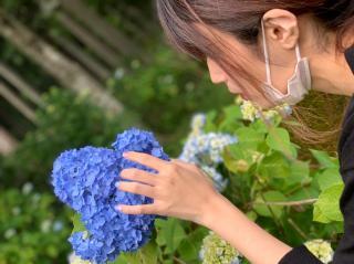 紫陽花とぴよ画像