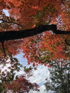 紅葉🍁画像