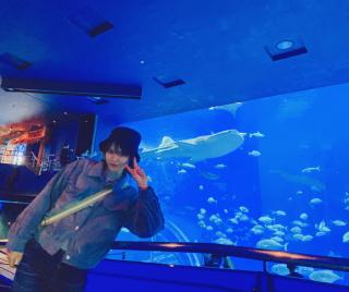 美ら海水族館画像