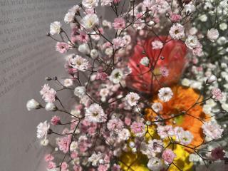ピンクのかすみ草🌸画像