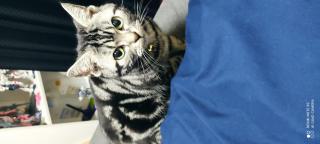 猫ちゃん画像