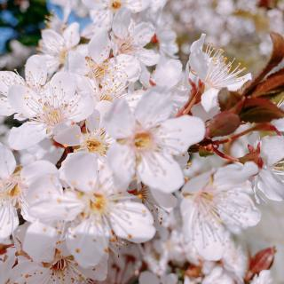 🌸桜が綺麗な季節🌸画像