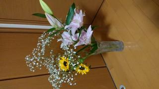 春のヒマワリ〜(^o^)v画像