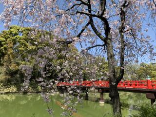 桜って日本だけ?画像