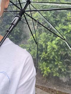梅雨入りかな?☔画像