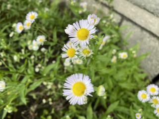 お花🌻画像