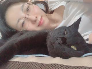 猫ネコ画像