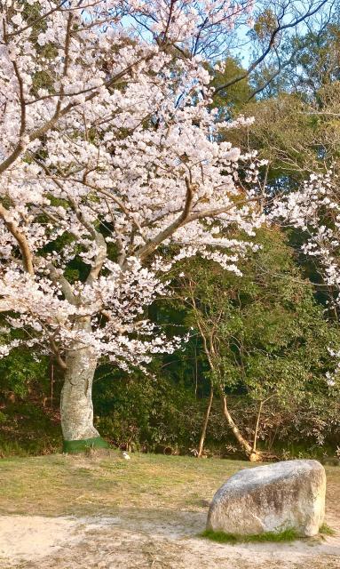 桜🌸〜桜🌸
